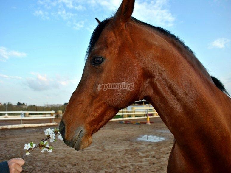 Elegant horses tamed by professionals