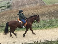 Clase Individual Equitación 1h Paterna de Rivera