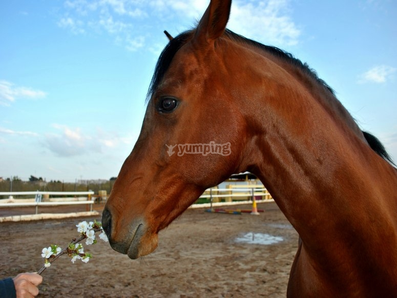 Noble and tamed horses in our country house