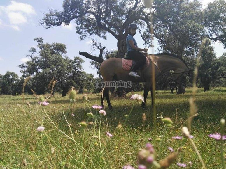 Horse ride tour accross plants