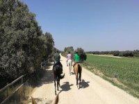 Vía Verde riding horses