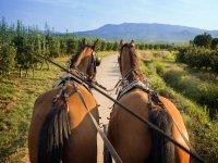 Calesa tirada por caballos