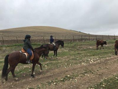 Horse ride tour tamed horses Paterna de Rivera 1h