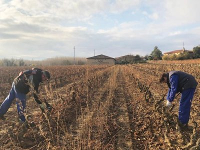 Wine and pruning tour for children in Haro