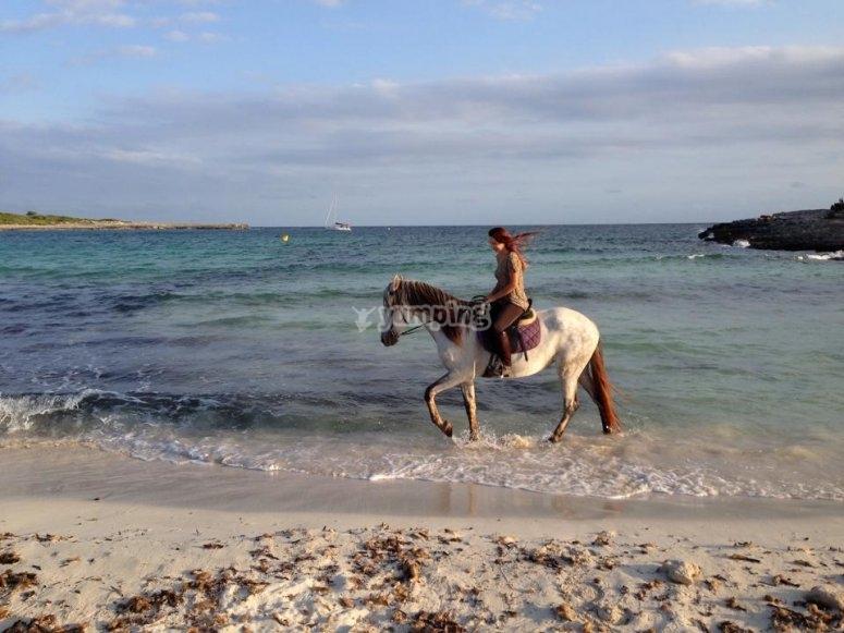 Paseando con caballo por la playa