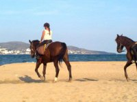 Horses on the sand