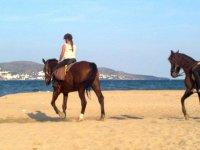 Caballos sobre la arena
