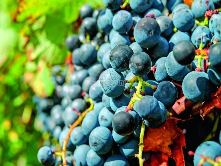 Lands for wine farming Valencia
