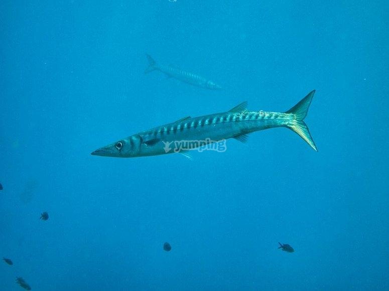Conoce las especies marinas de Cabo de Gata