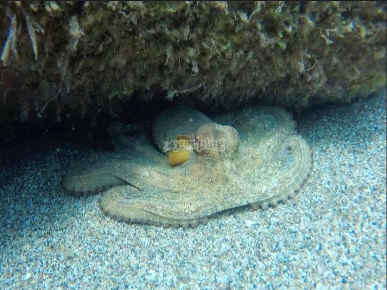 Junto a un pulpo en el mar