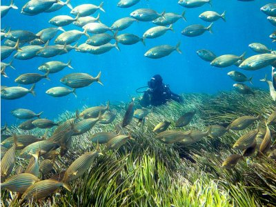 Scuba diving for beginners Cabo de Gata 3 hours