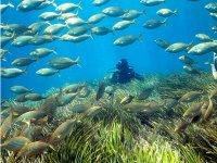 Entre banco de peces