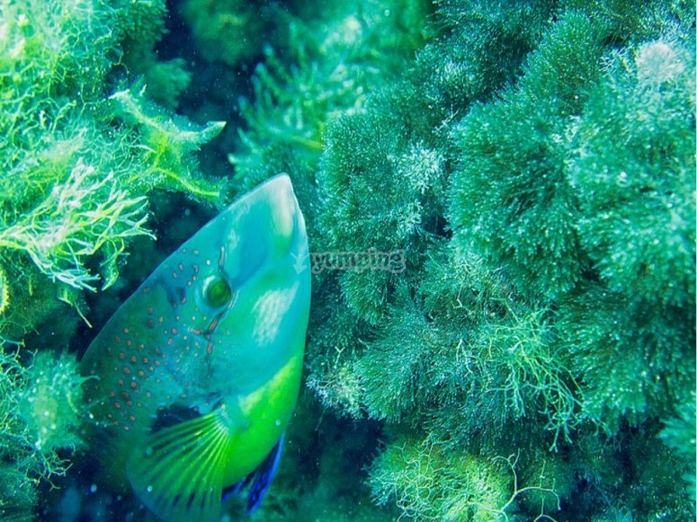 Descubre simpáticas especies marinas