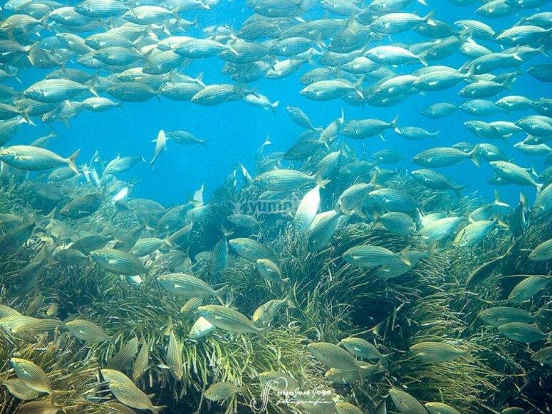 Inmersiones en Cabo de Gata
