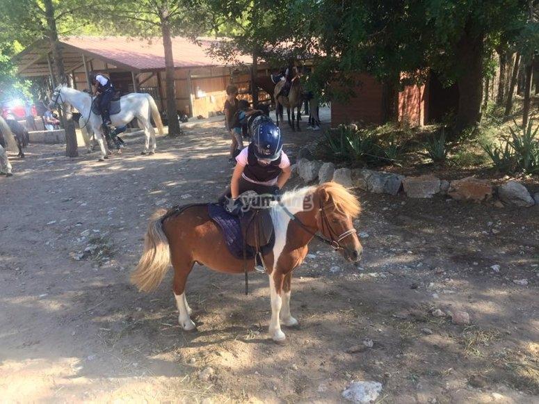 Informazioni sul pony