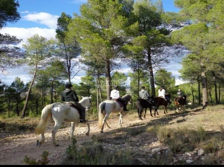 Horseback riding through Requena