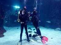 Buceando entre tiburones en el acuario