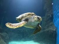 Tortuga marina en el acuario