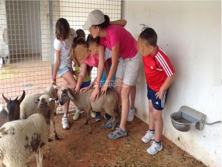 Campamento con granja escuela