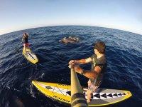 Sup entre cetaceos