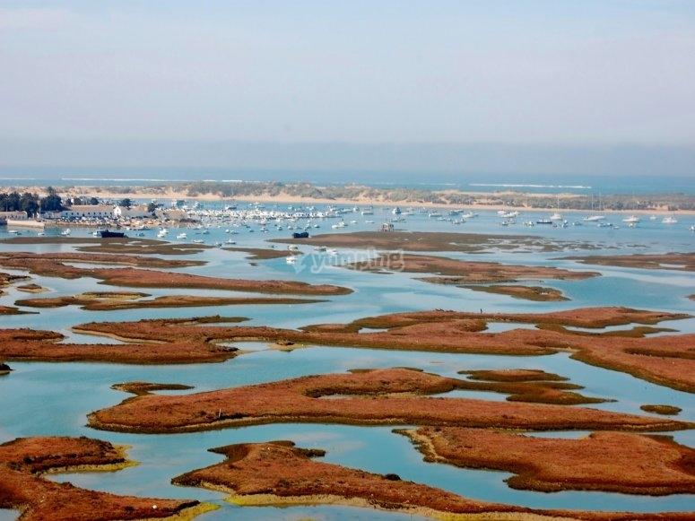Paseo por las marismas de Cádiz