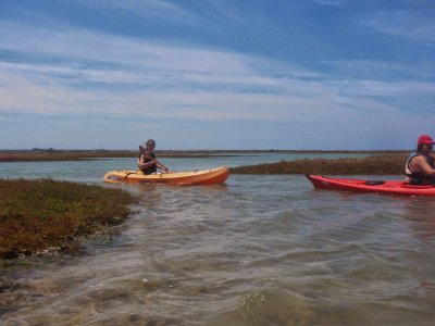 Kayak ride through Sancti-Petri marshes 2h, 5km