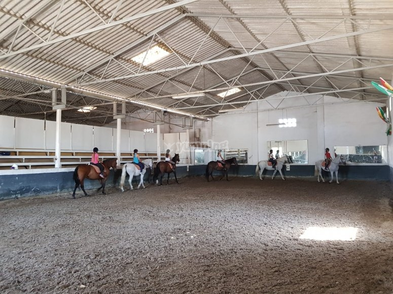 The horses in the riding school