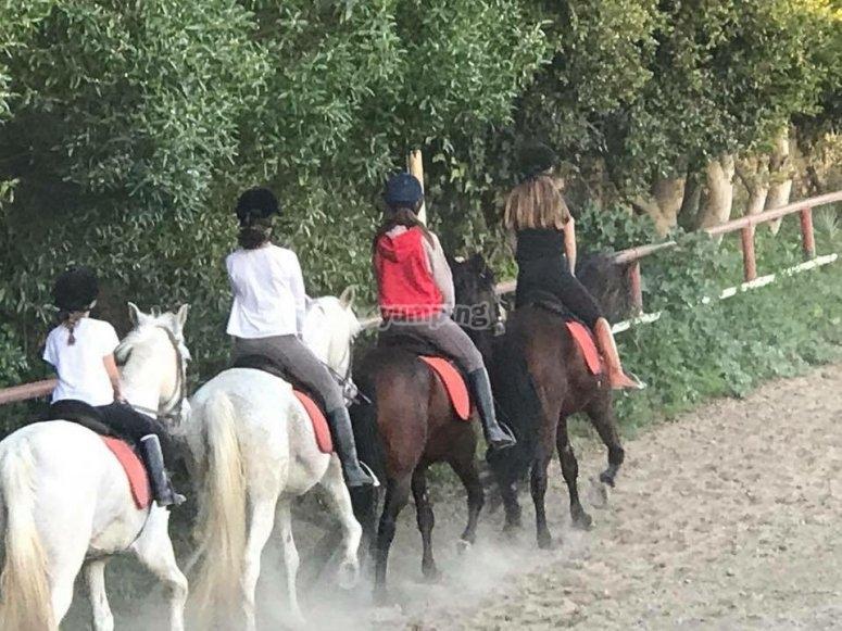Walking through the equestrian