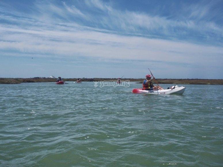 Paseo en kayaks Parque Natural Bahía de Cádiz
