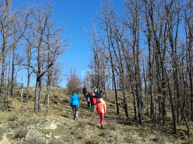 Paseando por el bosque en Albacete