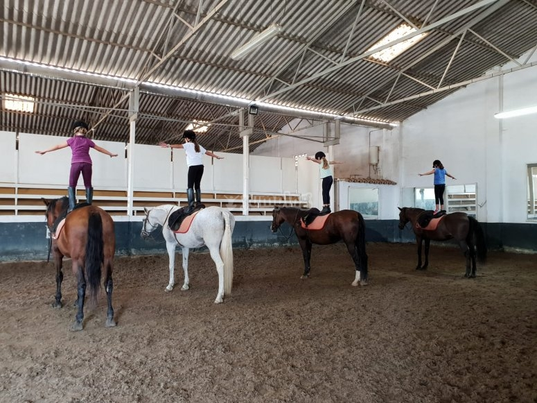 Classes on the horse