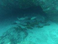 banco de peces en el fondo del mar