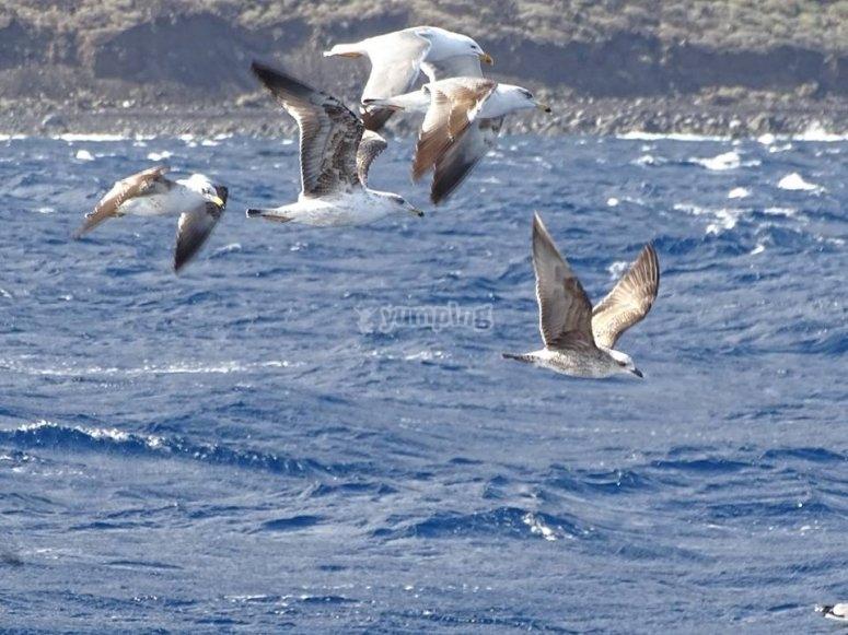 Aves revoloteando por océano Atlántico