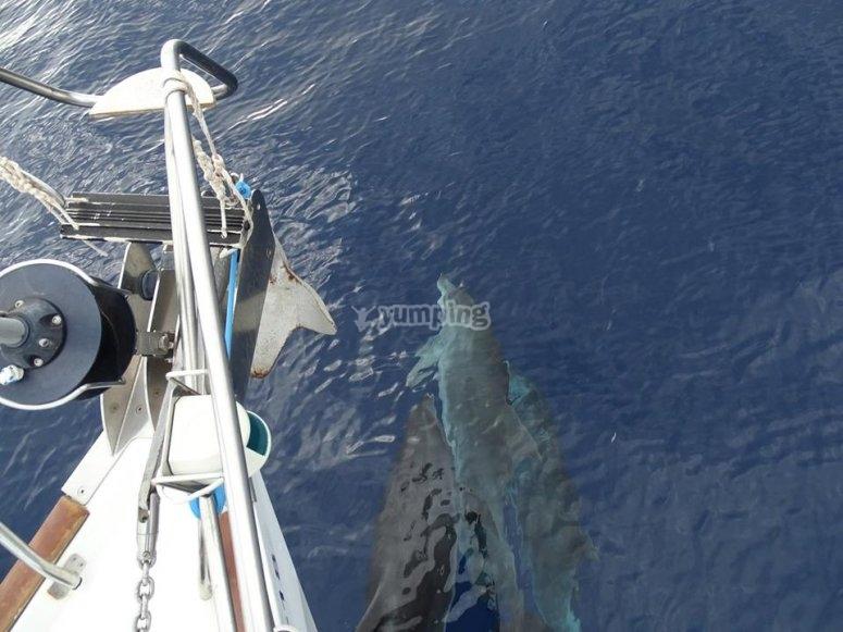 Paseo en barco con delfines y zifios