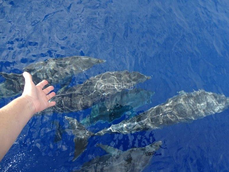 Animales marinos en el océano atlántico