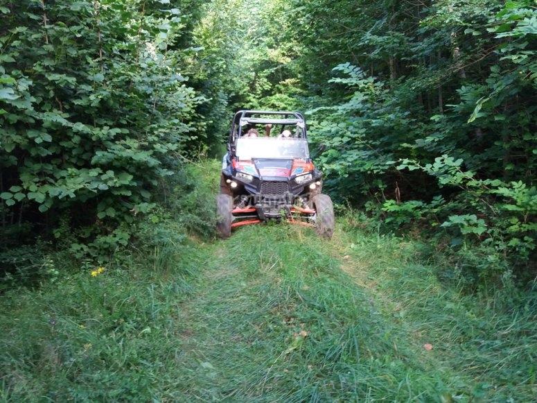 Ruta en buggy por bosque