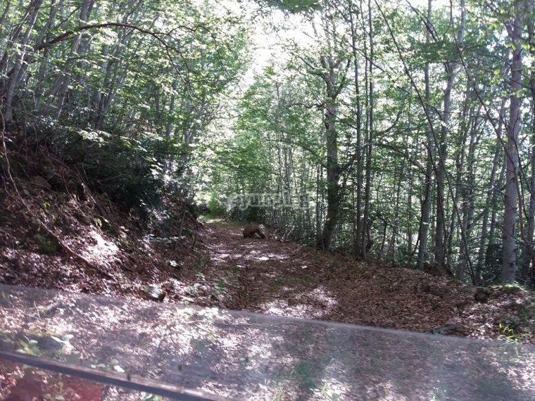 Paseo en buggy entre bosques