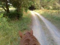 Vista desde la perspectiva del caballo