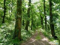 Bosques gallegos