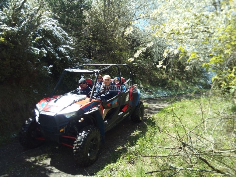 Senderos rodeados de bosque en buggy