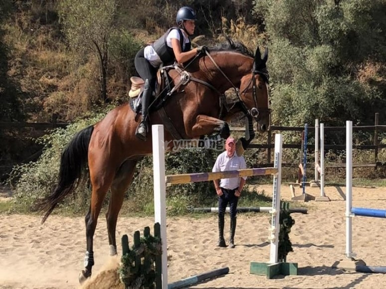 Jumping lessons in Fuengirola