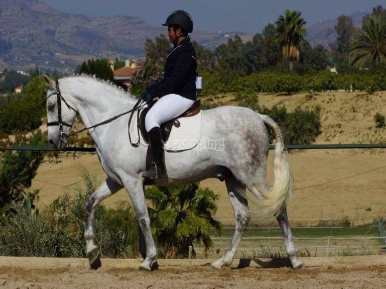 Docile horses for instruction