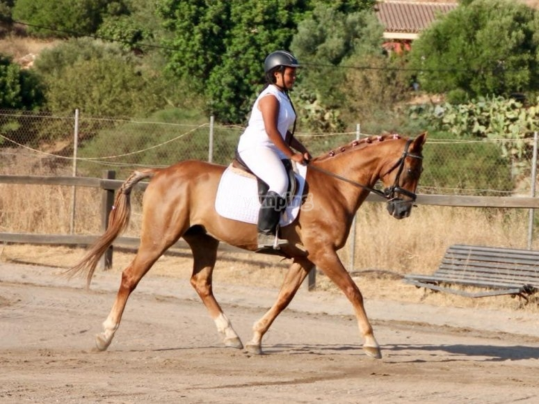 Dressage class for 30 minutes