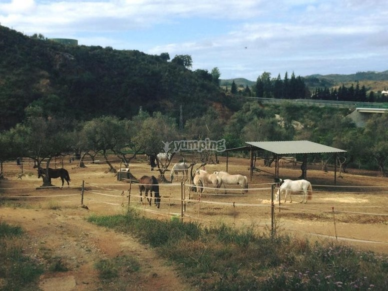 Our stables in Mijas
