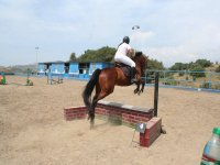 Horse jumping with amazon