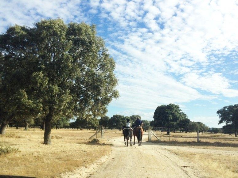 Due cavalieri salirono sui loro cavalli