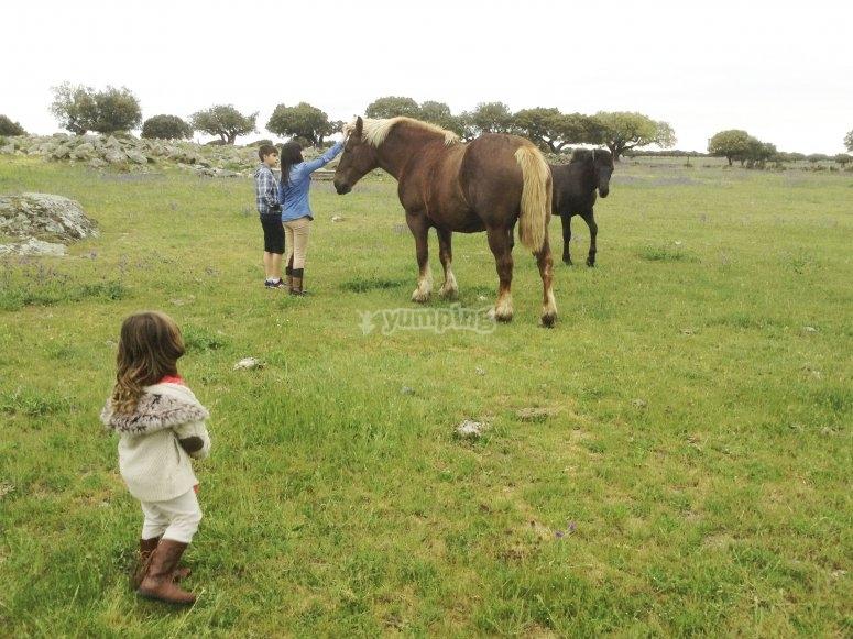 Cavalli nei nostri prati