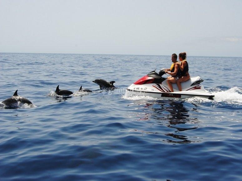 大西洋海豚