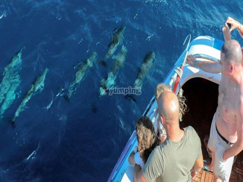 Delfines alrededor