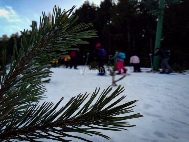 Emprendiendo una excursión con raquetas de nieve